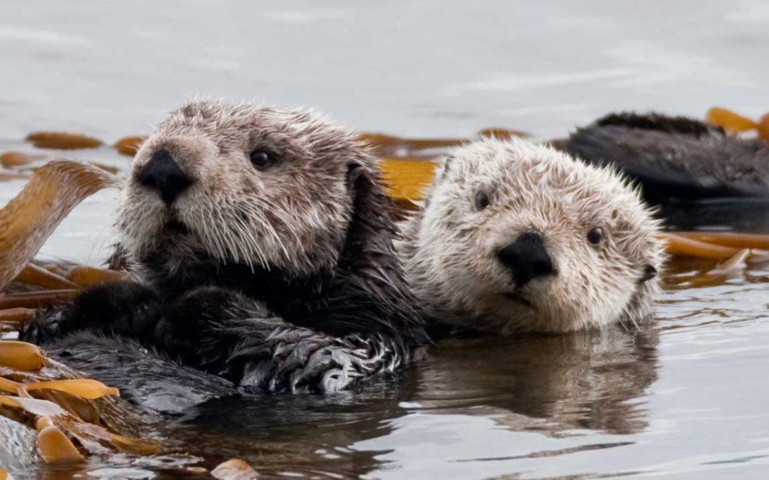 SLOCDP endorses creation of Chumash Heritage National Marine Sanctuary